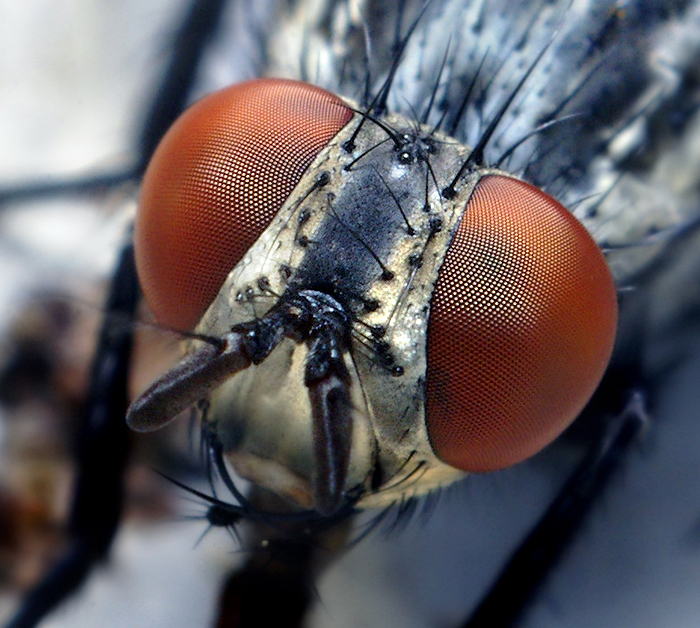 Scientists discovered that flies and other small creatures perceive time slower than humans.
