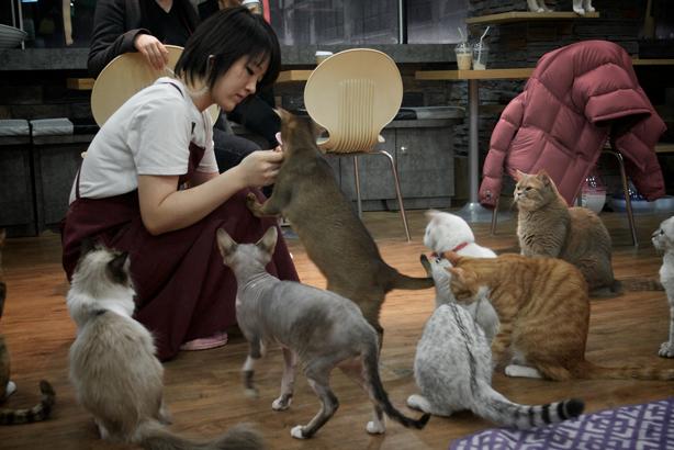 Could cats be in Vancouver's café future? (Image: Eco dallaluna)
