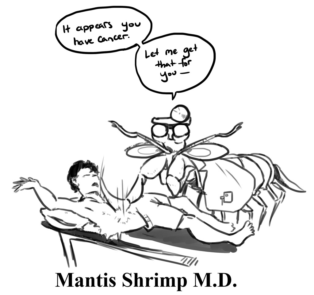 Since bringing a mantis shrimp to the operating table is inhumane, studying them must suffice. (Illustration: Anthony Biondi)