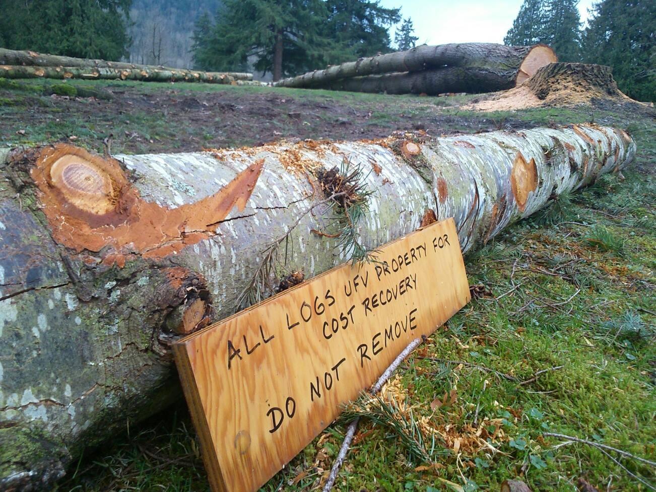 Chilliwack Log Joe Johnson
